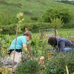 organicarts Community Garden